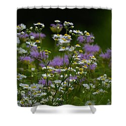 Meadow Light Shower Curtain by Tim Good