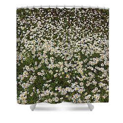 Shower Curtain featuring the photograph Meadow Of Daisey Wildflowers Panorama by James BO Insogna
