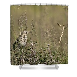 Meadow Pipit Shower Curtain