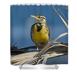 Meadowlark Beauty Shower Curtain