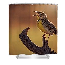 Meadowlark Shower Curtain