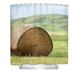 Meadowlark Heaven Shower Curtain by Todd Klassy