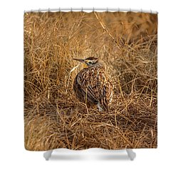 Meadowlark Hiding In Grass Shower Curtain by Robert Frederick