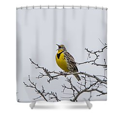 Meadowlark In Tree Shower Curtain by Marc Crumpler