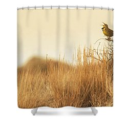 Meadowlark  Shower Curtain