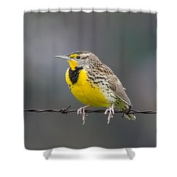 Meadowlark On Barbed Wire Shower Curtain by Marc Crumpler
