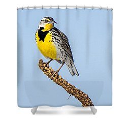 Meadowlark On Mullein Stalk Shower Curtain