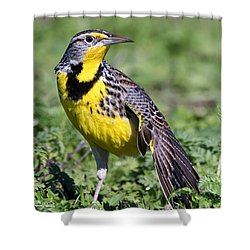 Meadowlark On The Runway Shower Curtain by Kathleen Bishop