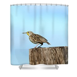Meadowlark Roost Shower Curtain by Mike Dawson