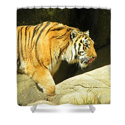Shower Curtain featuring the photograph Meal Time by Sandi OReilly