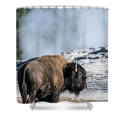 Shower Curtain featuring the photograph Meandering by Colleen Coccia