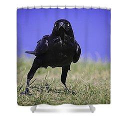 Menacing Crow Shower Curtain
