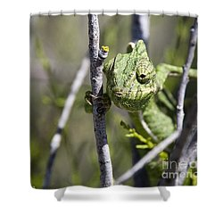 Mediterranean Chameleon Shower Curtain
