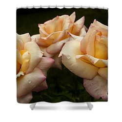 Medley Of Three Yellow Roses Shower Curtain