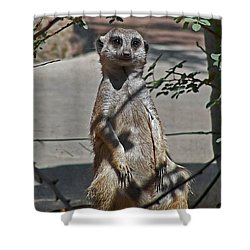 Meerkat 2 Shower Curtain