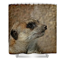 Meerkat 3 Shower Curtain