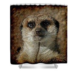 Meerkat 4 Shower Curtain by Ernie Echols