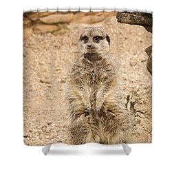Meerkat Shower Curtain by Chris Boulton