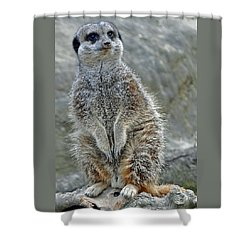 Meerkat Poses Shower Curtain