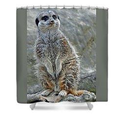 Meerkat Poses Shower Curtain