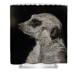 Meerkat Profile Shower Curtain