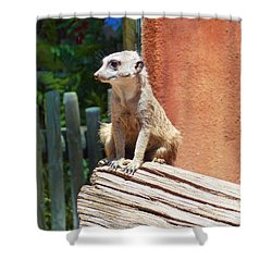 Meerkat Sentry Shower Curtain