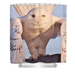 Meet Roofus Shower Curtain by Elaine Franklin