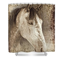 Meet The Andalucian Shower Curtain by Meirion Matthias