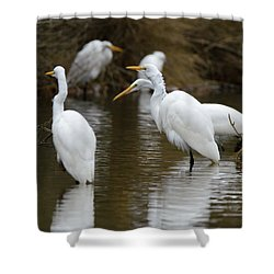 Shower Curtain featuring the photograph Meeting Of The Egrets by George Randy Bass