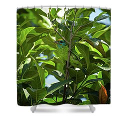 Megalaima Flavifrons Shower Curtain by Venura Herath