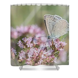 Meleagers Blue Butterfly Shower Curtain