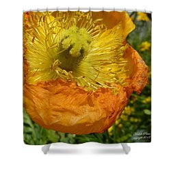 Mellow Yellow - Signed Shower Curtain