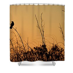 Melody At Dusk Shower Curtain
