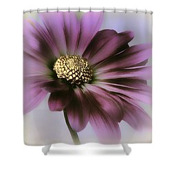 Shower Curtain featuring the photograph Memories Of Spring by Darlene Kwiatkowski