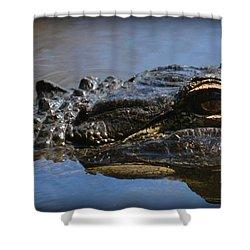 Menacing Alligator Shower Curtain