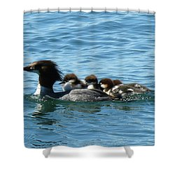 Merganser And Her Chicks Shower Curtain