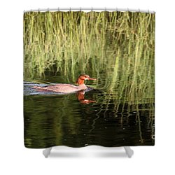 Merganser In The Reeds Shower Curtain