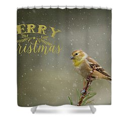 Merry Christmas Winter Goldfinch 1 Shower Curtain