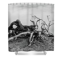 Mesquite Roots - Death Valley 2015 Shower Curtain
