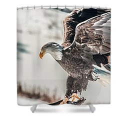 Metallic Bald Eagle  Shower Curtain