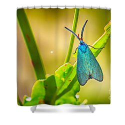 Metallic Forester Moth Shower Curtain