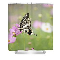 Mexican Aster With Butterfly Shower Curtain