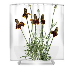 Mexican Hat Shower Curtain