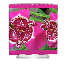 Mexican Shell Flower 1 Shower Curtain