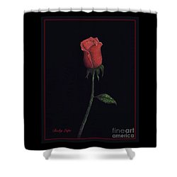 The Perfect Rose 2 Shower Curtain