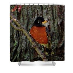 Michigan State Bird Robin Shower Curtain