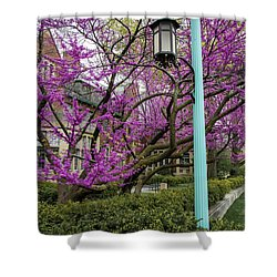 Michigan State University Spring 5 Shower Curtain by John McGraw
