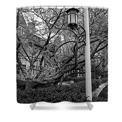 Michigan State University Spring 7 Shower Curtain by John McGraw