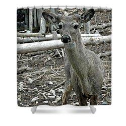 Shower Curtain featuring the photograph Michigan White Tail Deer by LeeAnn McLaneGoetz McLaneGoetzStudioLLCcom
