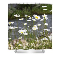 Mickelson Trail Daisies Shower Curtain